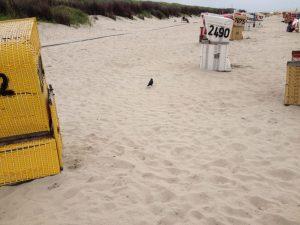 Strandkörbe schützen vor Wind